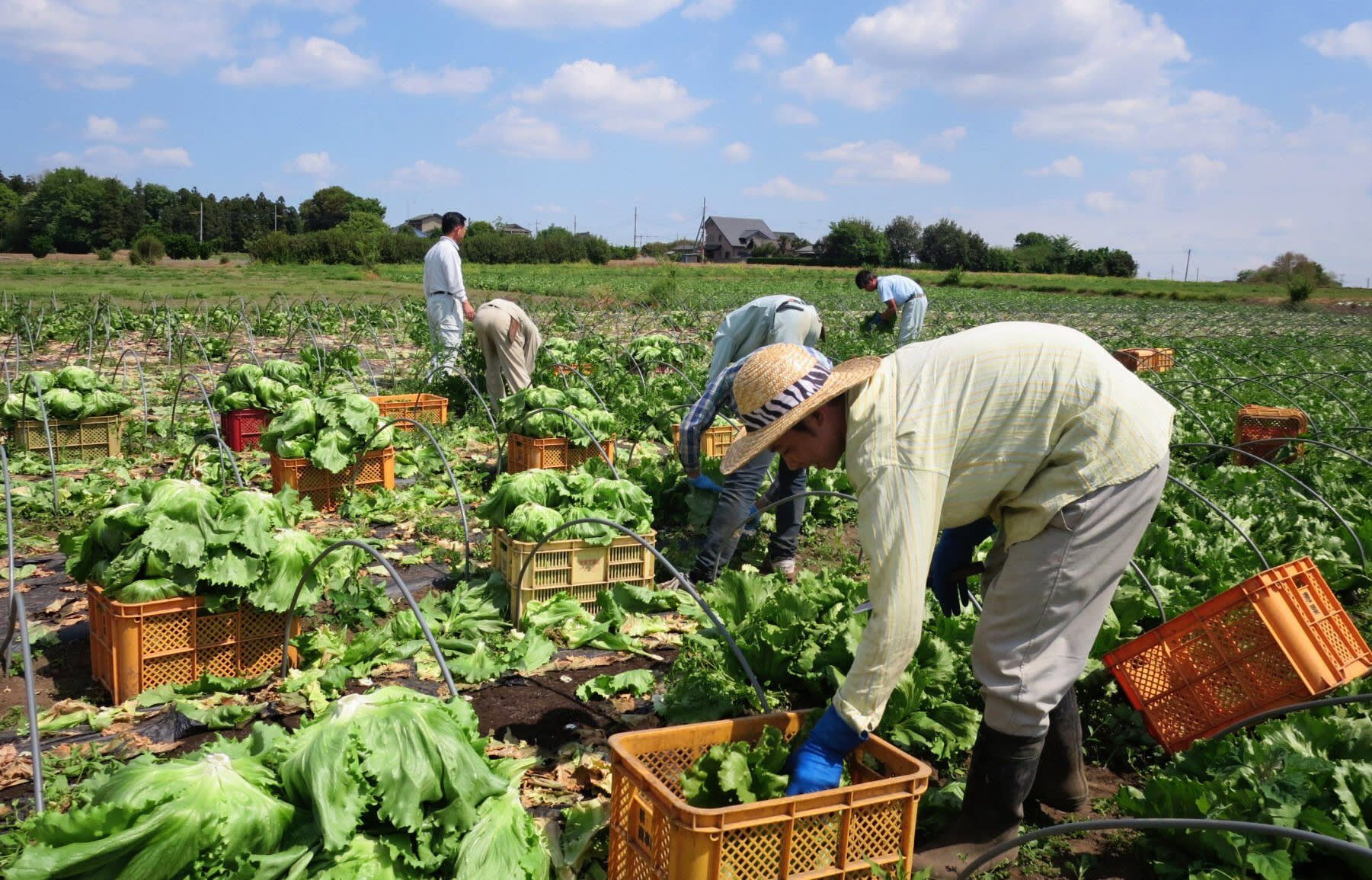 BREAKING: Canada announces 3 Year Permanent Residence Program for Agri-Food Workers